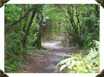 rain forest path to