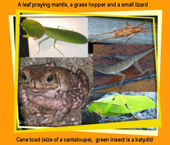 insects, toads & lizards