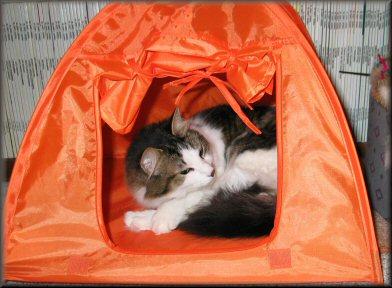 Iris in tent Iris rolling & Iris the Cat