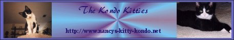 Nancy's Kitty Kondo