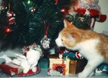 Curious kitten Boomer with Christmas tree