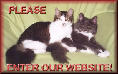 Please Enter Our Website