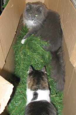 Iris & Fern in the box