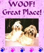 Woof Great Place Award